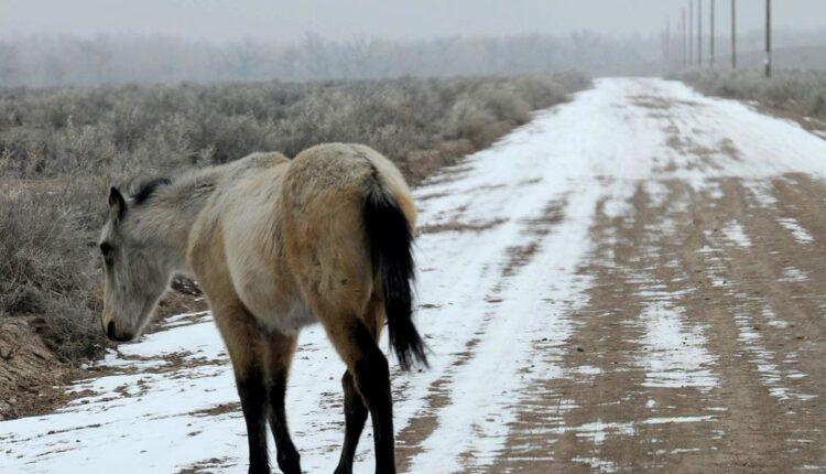 UIntah_Horses.jpg